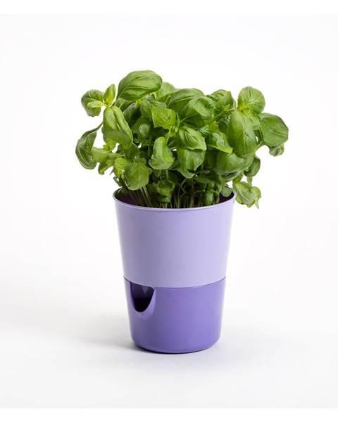 Váza Plastia